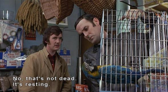 Dead-parrot-2